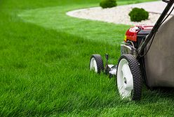 Trawnik mały i duży – jakie sprzęty do koszenia warto wybrać?