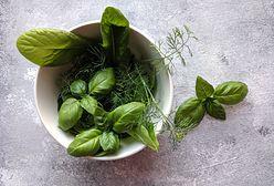 Sklepowe zioła w doniczce. Co zrobić, by znów odrosły?