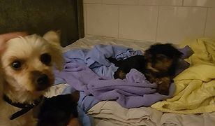 Zwierzęta, którymi opiekuje się Straż są w trudnej sytuacji