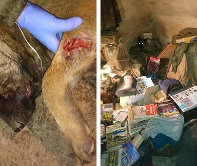 Owczarki belgijskie żyły w skandalicznych warunkach