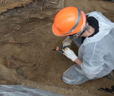 Prokuratura wstrzymała prace ekshumacyjne prowadzone przez IPN na warszawskim Służewcu