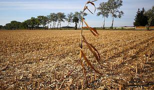Efekt zeszłorocznej suszy