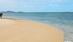 Nowa Kaledonia może stać się niepodległym państwem
