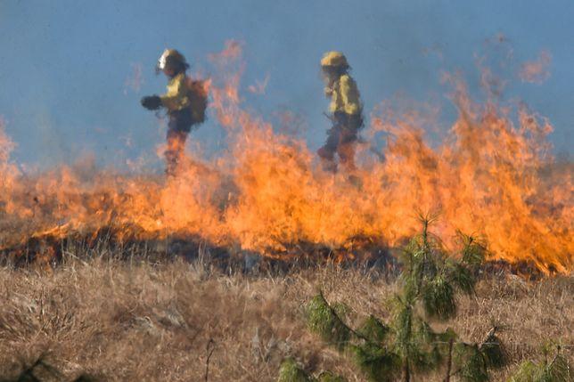 Śląskie. Wypalanie traw i nieużytków jest prawdziwą plagą.