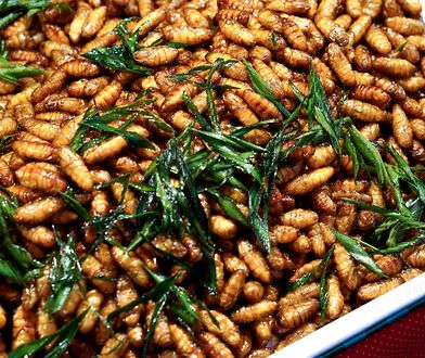 To, co dla jednych jest obrzydliwe i wręcz nie do zjedzenia, dla innych może być rarytasem. Przykładem mogą być larwy.