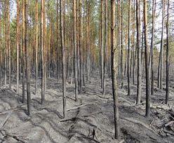 Tak wygląda las w okolicy S8. Smutny widok pod Ząbkami