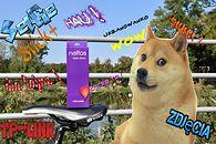 TP-Link Neffos Selfie Stick+ HotZlotowym przedłużeniem... ręki