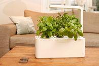 Smart Herb Garden od Click & Grow, czyli miniogródek we własnej kuchni