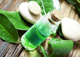 Pięć sposobów na zastosowanie olejku herbacianego