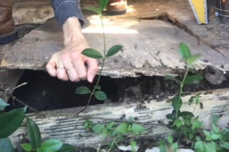 Przerażające odkrycie pod podłogą szopy. Kobieta zrobiła to gołymi rękami