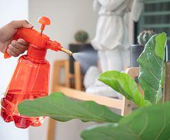 Podlej kwiaty wodą z mlekiem. Domowa odżywka dla roślin