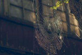Sposoby na pająki. Jak je odstraszyć i co zrobić, gdy pogryzą?