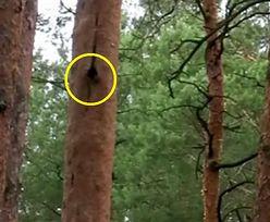 Zjada 20 tys. komarów na dobę. Niezwykły mieszkaniec polskich lasów!