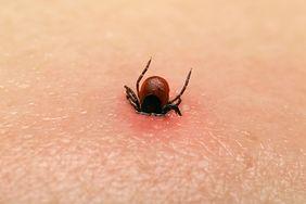 Choroby przenoszone przez kleszcze. Sprawdź, o których nie wiedziałeś