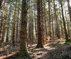 Majówka 2020. Lasy wokół Warszawy otwarte. Jest jeden wyjątek
