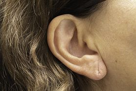 Budowa ucha zewnętrznego, wewnętrznego i środkowego
