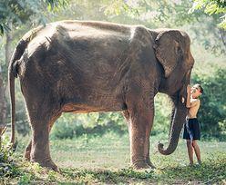 """Fascynujące odkrycie. Słonie """"zarażają się"""" ziewaniem od ludzi?"""