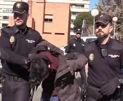 Hiszpania. Zabił matkę i nakarmił nią psa