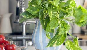 Uratuj przesuszone rośliny doniczkowe
