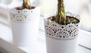Rośliny mogą szkodzić zdrowiu
