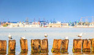 Turyści rekomendują najlepsze apartamenty w Gdyni