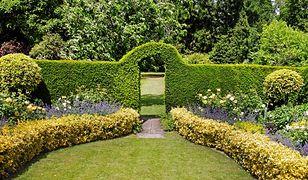 Żywopłot to naturalna forma ogrodzenia, która efektownie wygląda o każdej porze roku i chroni przed ciekawskimi spojrzeniami z zewnątrz.