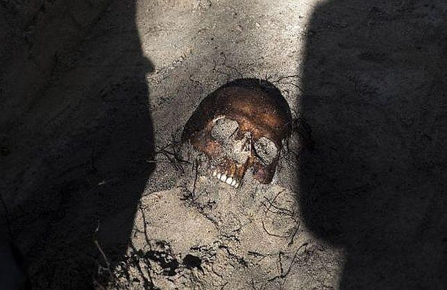Szczątki żołnierzy wyklętych znaleziono na Cmentarzu Bródnowskim. Zginęli od strzału w potylicę