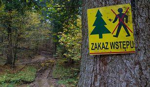 Koronawirus w Polsce. Nie wejdziesz do lasów w Małopolsce