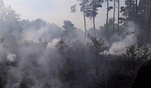 Koronawirus w Polsce. Rząd ma wydać rozporządzenie w sprawie zakaz wstępu do lasów