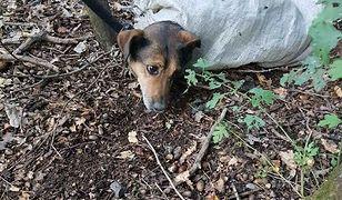 Znalazła psa w lesie. Był w worku, miał związane łapy