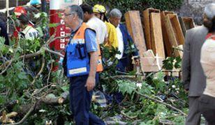 Tragiczna procesja. Wiernych przywaliło drzewo. Nie żyje 12 osób