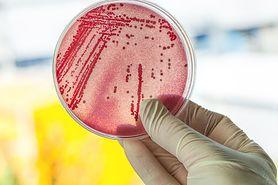 Kapsułki z nanowłókien sposobem na antybiotykooporne bakterie