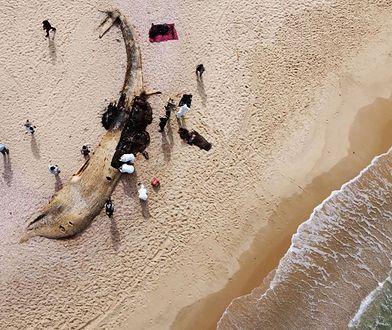"""Wyciek ropy w Izraelu. Zamknięto plaże. """"Największa katastrofa ekologiczna kraju"""""""