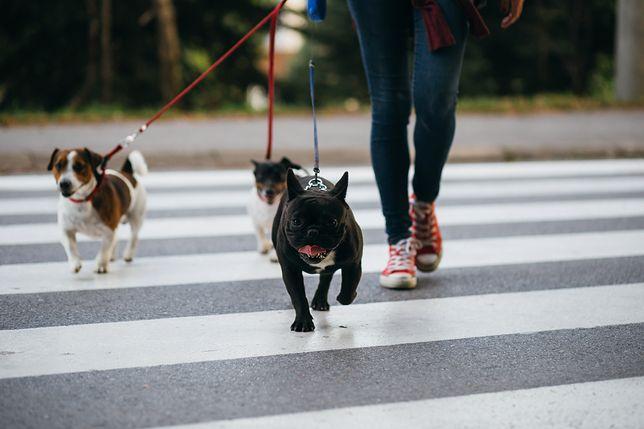 Poranny spacer z psem to idealny sposób na rozpoczęcie dnia