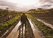 Sawicki: jest propozycja pośrednia ws. składki zdrowotnej rolników