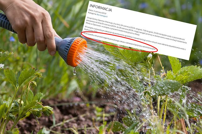 Od 500 zł wzwyż może kosztować załamanie zakazu podlewania ogrodu i mycia auta w upał.