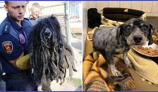 Okrutnie zaniedbanego psa, znaleźli w Łodzi strażnicy miejscy z Animal Patrolu.