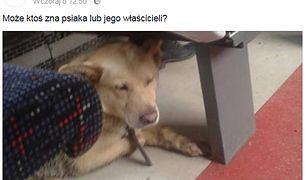 Pies - pasażer PKM