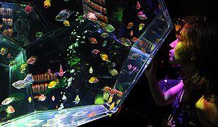 Artystyczne akwarium