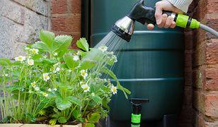 W sezonie wiosenno-letnim zużywamy spore ilości wody do podlewania ogrodu. Czy naprawdę trzeba do tego wykorzystywać deficytową wodę pitną?