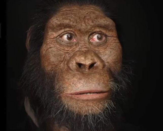Twarz starożytnego przodka ujawniona. Żył 3,8 mln lat temu