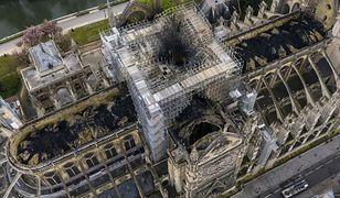 Katedra Notre Dame. Ocalały pszczoły na dachu