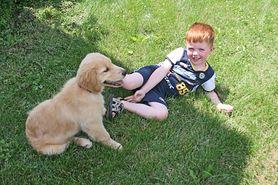 Najbardziej przyjazne rasy psów dla dzieci. Jakiego psa wybrać i czym go karmić?