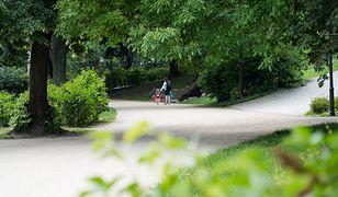 Wrocław. Miasto coraz bardziej zielone. Będą nasadzenia drzew w nowych miejscach