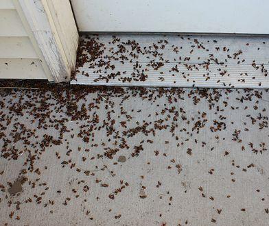 Mieszkańcy skarżą się również na złe traktowanie, Foto: Zdjęcie ilustracyjne