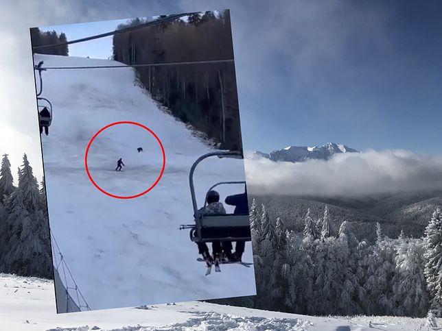 Niedźwiedź gonił narciarza na stoku