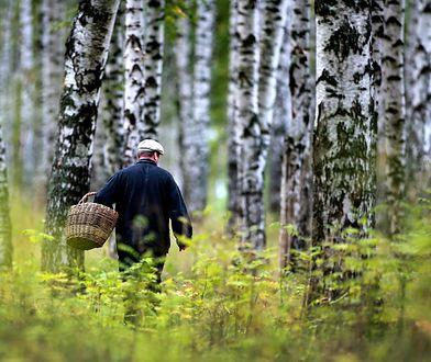 To już ten moment! Grzybiarze szaleją w lasach, byle nie autami