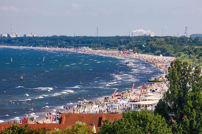 Straszą spacerujących nad Bałtykiem wyglądem i zapachem. Eksperci uspokajają