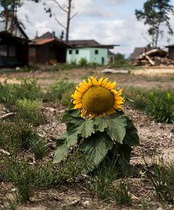Rok po nawałnicy: pomóżmy spełnić marzenie. O Wigilii we własnym domu