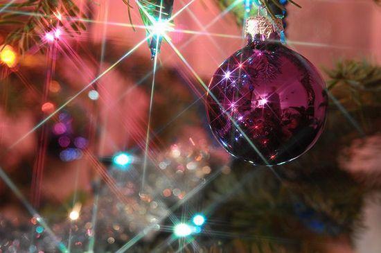 Magiczne drzewka - zdjęcia Internautów